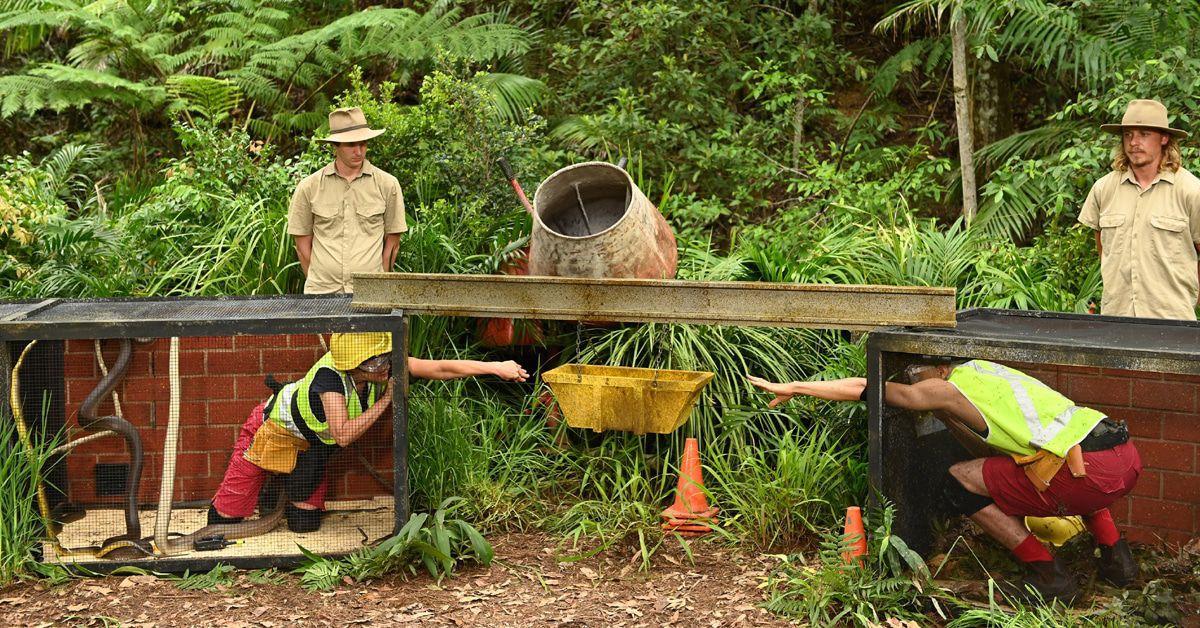 Dschungelcamp Tag 10: Ein-Sterne-Desaster und muss raus