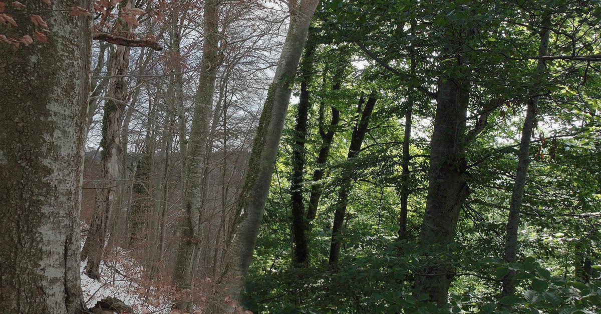 "Kritik ""Das geheime Leben der Bäume"": Der Kinofilm zum Buch-Bestseller"
