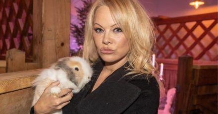 Pamela Anderson möchte lieber ein Tier sein