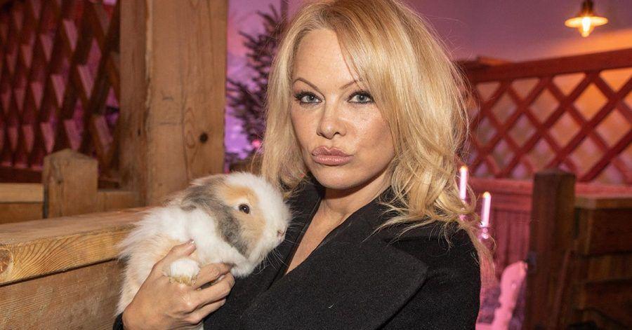 Pamela Anderson: Ist das der Grund für ihrem 2 Wochen-Ehe-Flopp?