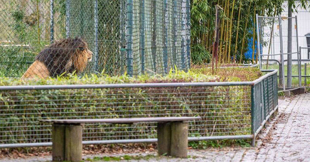 Langeweile bei Tieren: Corona-Virus lähmt die Zoos