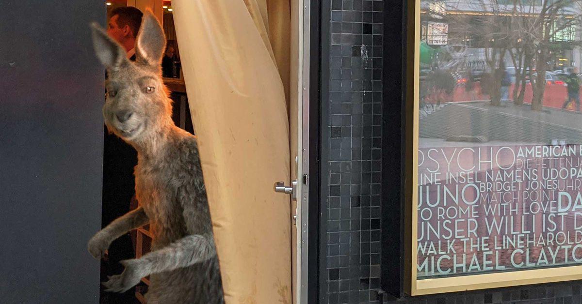 """""""Die Känguru-Chroniken"""" wieder da: Zuschauer sollen 3D-Brille mitbringen"""