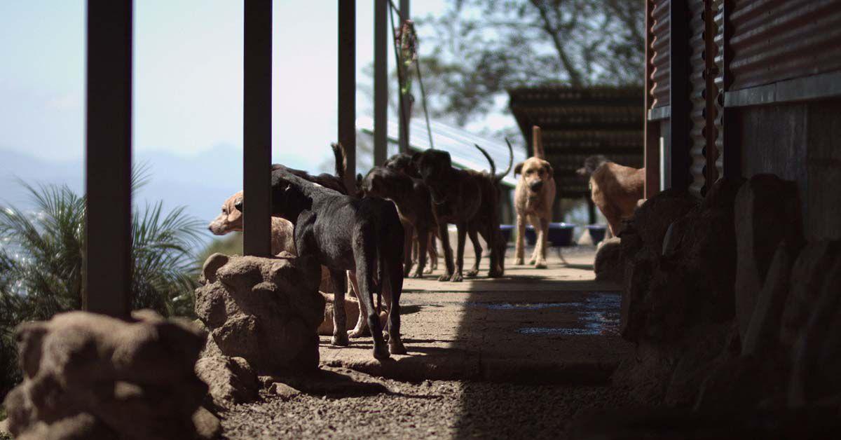 der bewegende Dokumentarfilm CODY – WIE EIN HUND DIE WELT VERÄNDERT erzählt die Geschichte des rumänischen Straßenhundes Cody, der von einer jungen schweizerischen Familie adoptiert wird und ein sicheres Leben in Zu?rich verbringen darf. Gleichzeitig verliert Cody dabei seine Freiheit, die er als Straßenhund gekannt hatte. Regisseur Martin Skalsky geht in seinem Film der Frage nach, inwiefern wir Menschen u?berhaupt bereit sind, Tieren Rechte und Entscheidungsfreiräume einzuräumen. Was wu?rde passieren, wenn Cody wieder mit seiner alten Lebenssituation konfrontiert wird? Fu?r welches Leben wu?rde er sich entscheiden? Und könnte ich diese Entscheidung respektieren und mit den Konsequenzen leben?