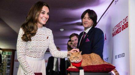 "Prominenter Fan: Herzogin Kate streichelt Bob bei der Premiere zu ""A Street Cat Named Bob"" 2016 in London (dms/spot)"