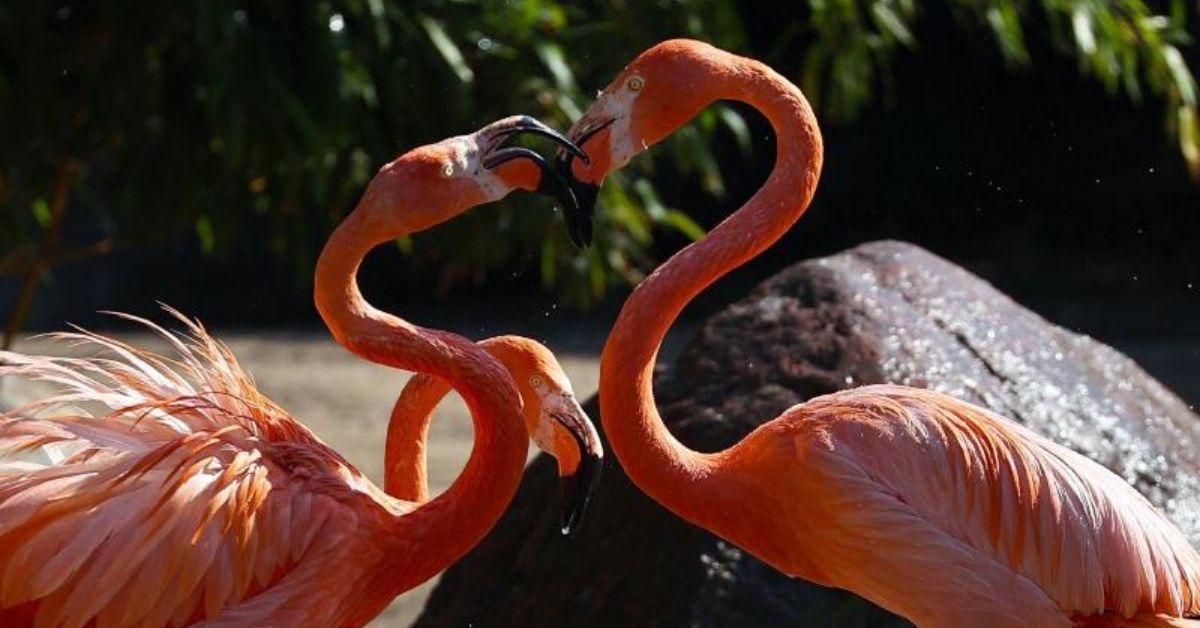 Tierpark Hagenbeck: Das hilft bei Affenhitze im Zoo