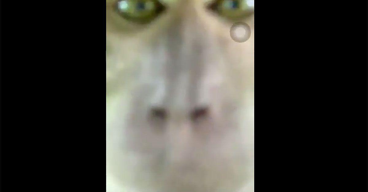 Dieser Affe klaut Smartphone und macht Fotos
