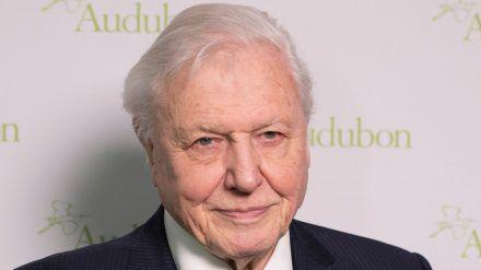 Sir David Attenborough meldet sich bei Instagram an - und bricht sogleich einen Rekord. (cos/spot)