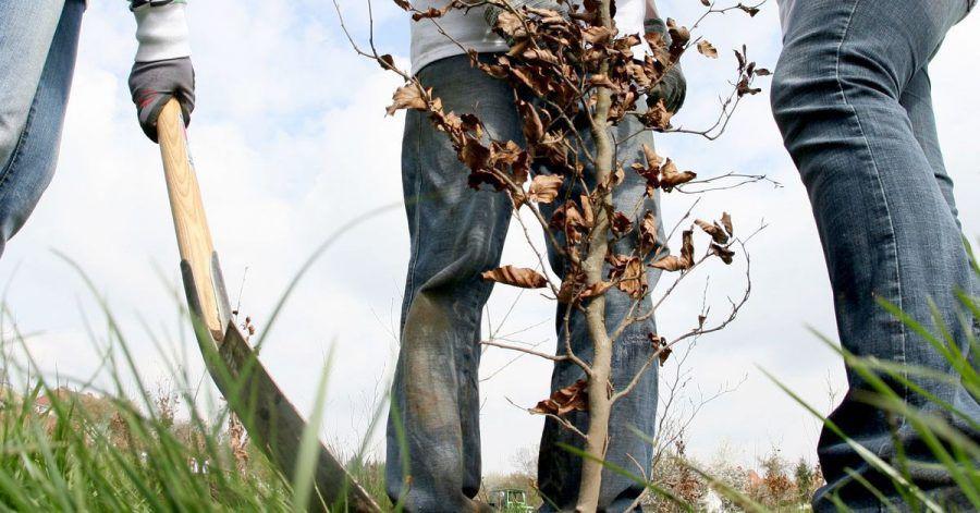 Auch im Herbst kann man noch Bäume pflanzen. Ihre Wurzeln können dann nämlich den Winter über in Ruhe wachsen.