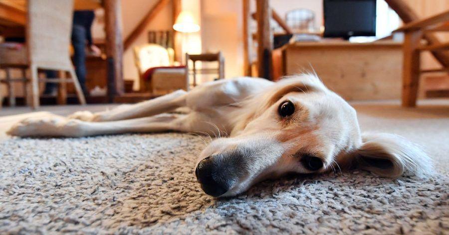 Ein neues Siegel soll es Hundebesitzern erleichtern, tierfreundliche Unterkünfte zu finden.