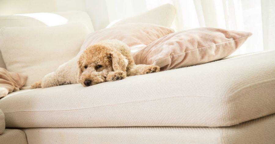 Beim Streit um den Hund nach einer Scheidung können Tierschutz-Gründe ausschlaggebend sein.