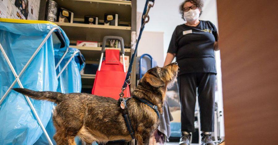 Ein Dackel steht wartend vor Helferin Inge Böhm an der Ausgabe von Tierfutter an bedürftige Tierbesitzer in der Frankfurter Tiertafel.