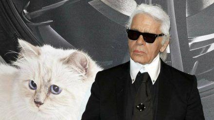 Karl Lagerfelds Katze Choupette wird zum Werbegesicht. (cos/spot)