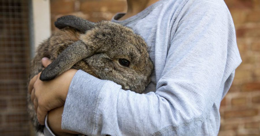 Ob es Kaninchen wirklich gut geht, ist für Halter oft gar nicht so einfach zu erkennen. Die Stellung der Ohren kann aber wichtige Hinweise geben.
