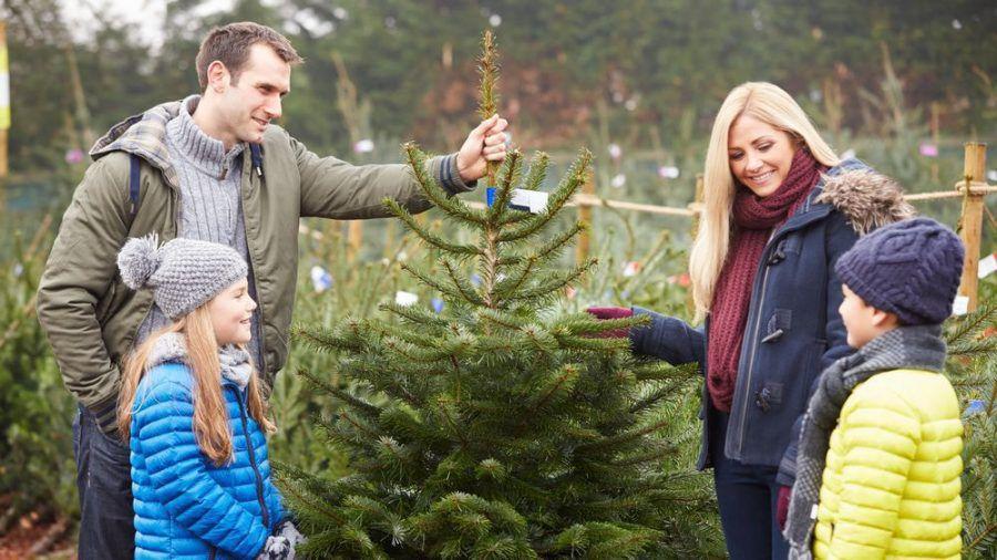 Ein festlich geschmückter Baum gehört für viele zu Weihnachten dazu (amw/spot)