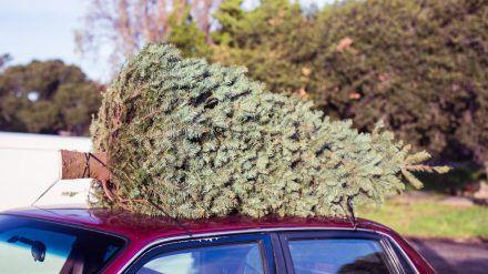 Der Weihnachtsbaum aus dem nahegelegenen Forst ist meist besser für die Umwelt. (ncz/spot)