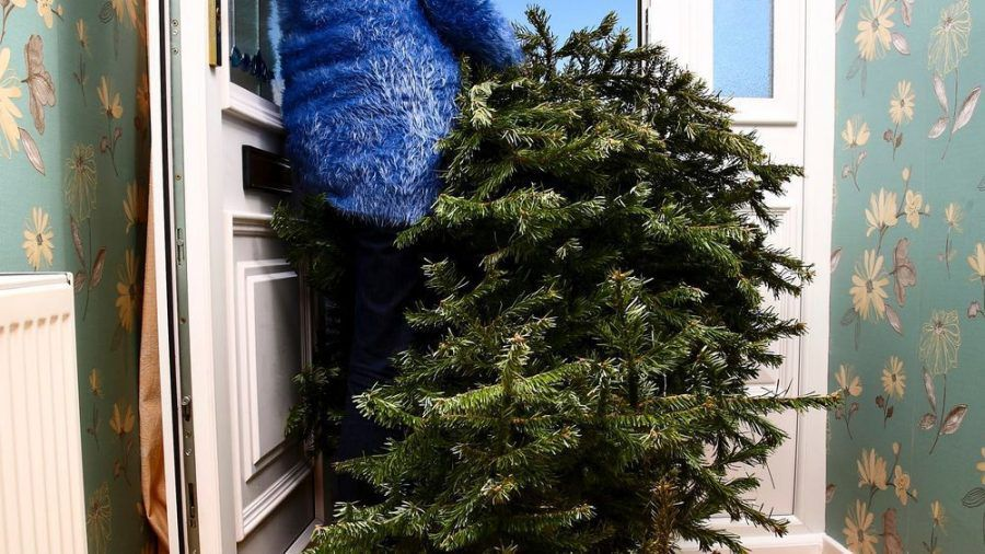 Weihnachtsbäume finden Wiederverwendung im Garten und in der Küche. (eee/spot)
