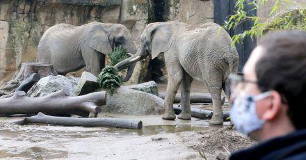 Aafrikanische Elefanten im Duisburger Zoo.