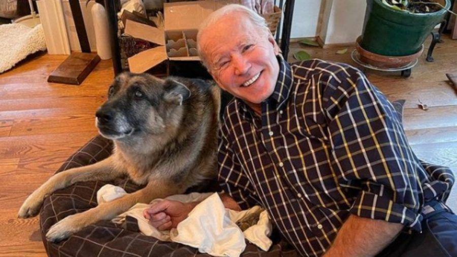 """Joe Biden: Die """"First Dogs"""" ziehen ins Weiße Haus ein"""