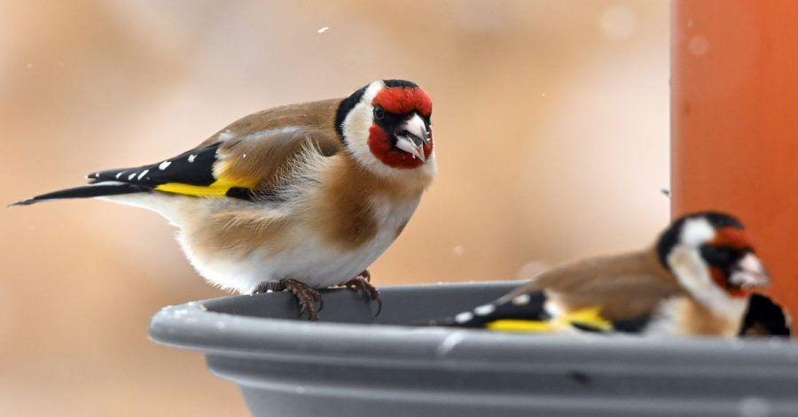 Wer Vögel im Winter füttern will, sollte ihnen das Futter ohne Plastikverpackung anbieten.