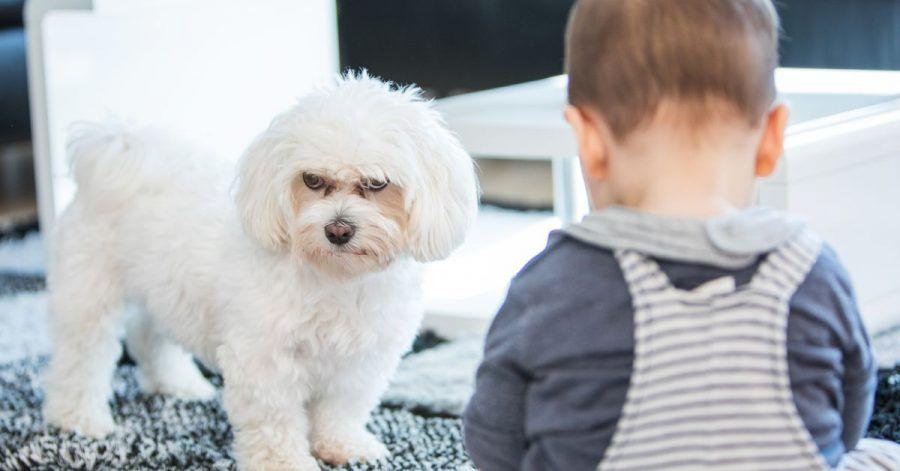Grundsätzlich müssen Eltern sicherstellen, dass das Kind mit dem Tier nicht alleine ist.