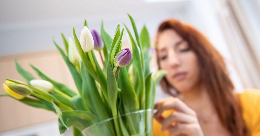 Tulpen in der Vase können weiterwachsen.