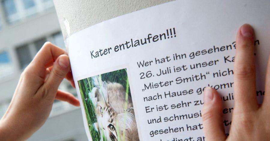 Mit Suchplakaten kann man auf vermisste Tiere in der Nachbarschaft aufmerksam machen.