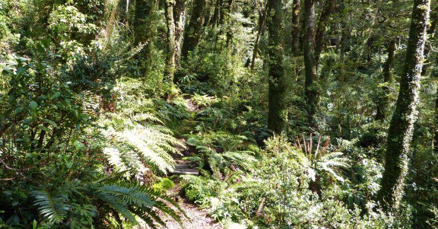 Nicht tropisch, aber dennoch feucht: Der Kaltregenwald des Queulat-Nationalparks ist ein spektakuläres Wanderrevier.