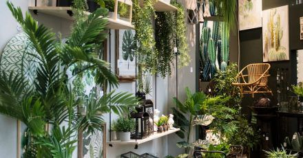 «Urban Jungle» ist angesagt: bei dem wilden Mix von Grün ist wichtig, dass alle Pflanzen die gleichen Ansprüche an Licht und Pflege haben.