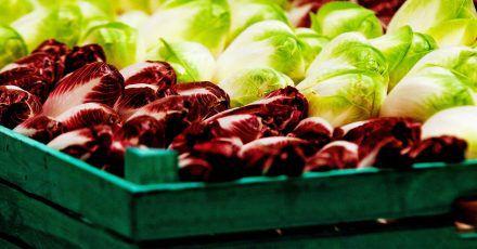 Kombiniert mit Äpfeln, Fenchel oder Honig ist Chicorée weniger bitter.