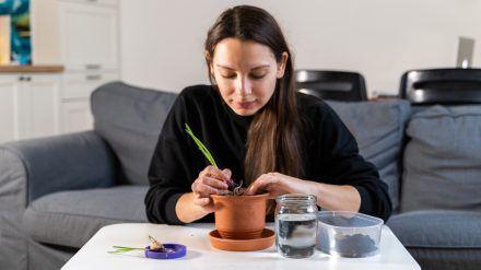 Auch im Wohnzimmer lassen sich Gemüse und Kräuter anbauen. (eee/spot)