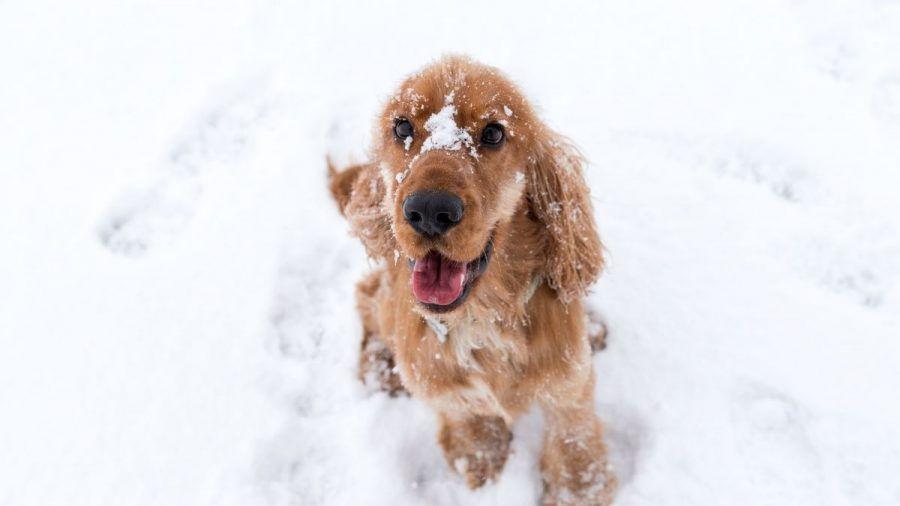 Video: Hund hilft Herrchen beim Schneeschieben!