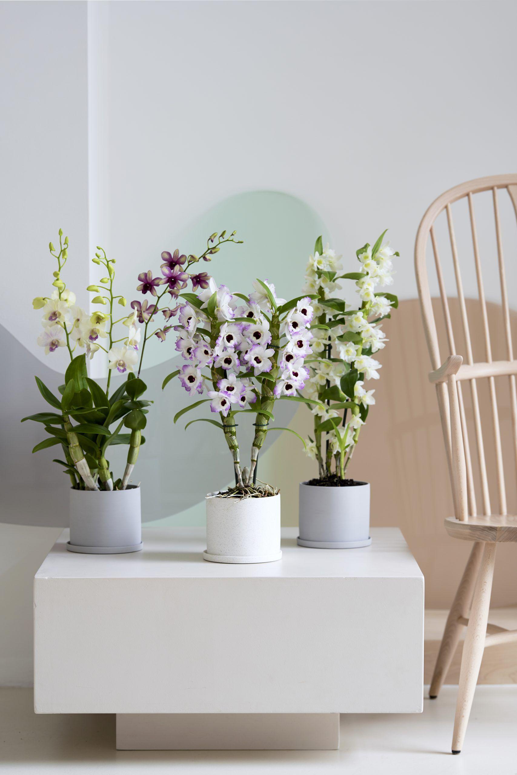 Stress-Befreier & Health-Booster: Zimmerpflanzen als grüne Superhelden