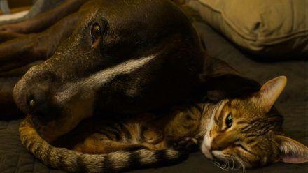 Video: Pitbull Mako: Dieser Hund verhält sich wie eine Katze