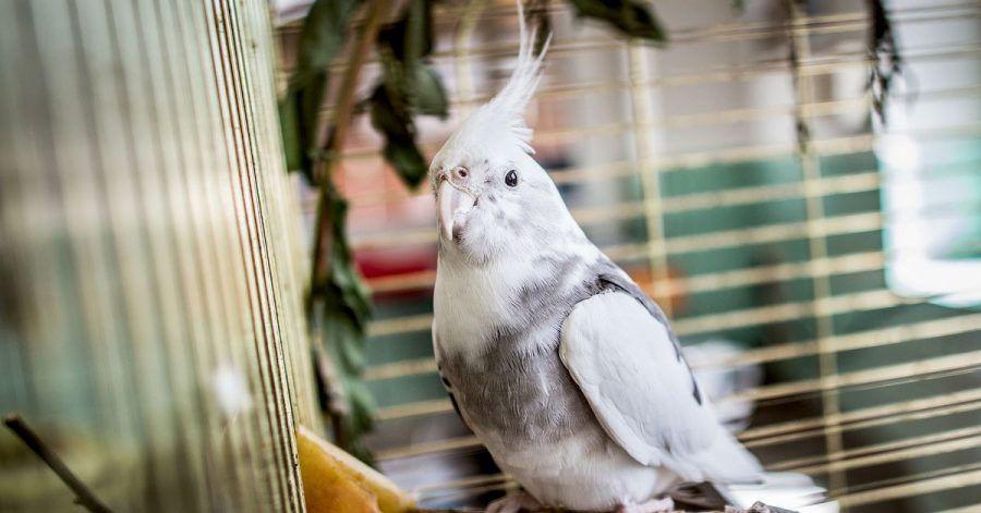 Tierärzte sorgen sich um die Versorgung von Exoten, wenn der Versand von Medikamenten verboten ist.