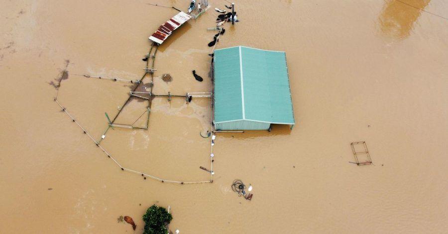 Blick auf eine überschwemmte Farm in Wingham, von der nur noch Umrisse erkennbar sind und im Wasser stehende Tiere.