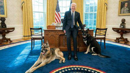 Joe Biden mit seinen Hunden im Weißen Haus (hub/spot)