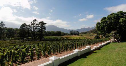 Das Weingut Rickety Bridge nutzt zum Beispiel Auktionsseiten, um ihren Wein unter die Leute zu bringen.