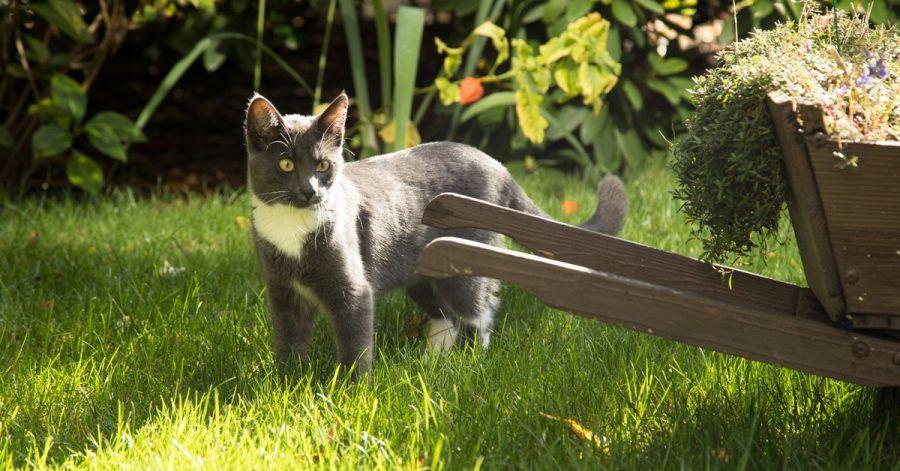 Im Frühling suchen Katzen nicht nur die Wärme der Sonne, sondern auch einen potenziellen Partner für den Nachwuchs.