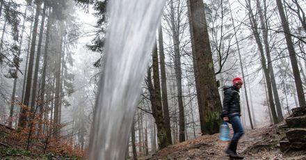 In einem breiten Strahl fließt das Wasser der Kahle Born Quelle aus einem Rohr in den Wald bei Kiedrich. Jeden Tag kommen unzählige Menschen in den Wald, um das Quellwasser abzufüllen.