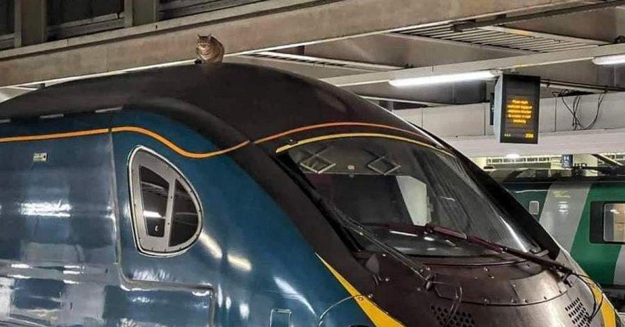 Eine Londoner Katze will als blinder Passagier nach Manchester.
