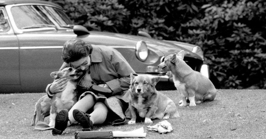 Königin Elizabeth II. gilt als Tierfreundin. Corgis mag sie besonders. Das war schon immer so, wie hier 1973.