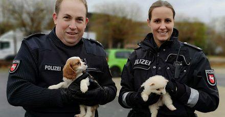 Polizeikommissarin Farina Nolde und Polizeikommissar Torsten Schrader halten während eines Polizeieinsatzes in Lahe zwei Hundewelpen.