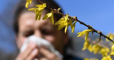 Erleichterung für Allergiker: Corona-Masken können nicht nur Viren, sondern auch Pollenkörner abhalten.