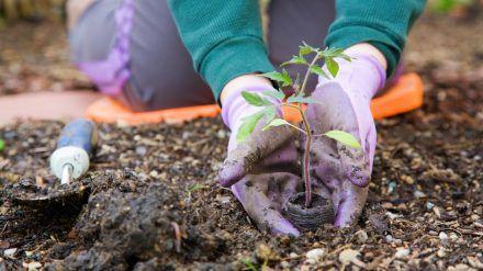 Wer seinen Garten schon im März pflegt, hat das restliche Jahr mehr von ihm. (sob/spot)