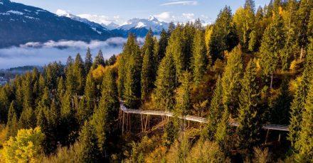 Der neue Baumwipfelpfad in Laax in Graubünden wird 1,5 Kilometer lang sein.