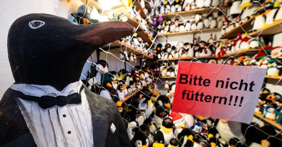 Ob als Plüschtier, als Sammlerfigur oder auf Krawatten - im Pinguin-Museum Cuxhaven wimmelt es vor Frackträgern.