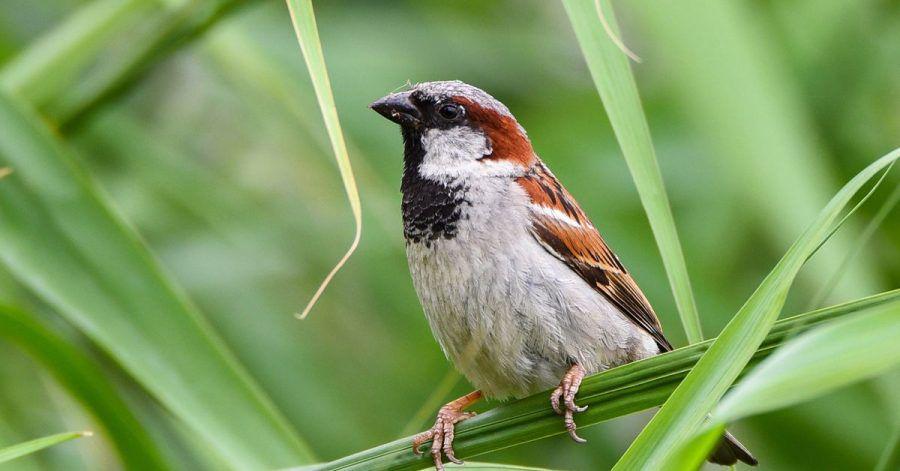 Spatzen und andere Vögel können zuweilen ziemlich laut sein und Schmutz machen, damit müssen Mieter leben.