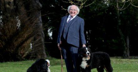Michael D. Higgins, Präsident von Irland, zeigt bei einem Spaziergang seinen neuen fünf Monate alten Berner Sennenhund Misneach (r, Irisch für «Mut»).