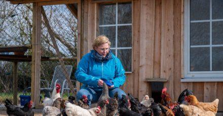 Karin Jaskowsky füttert im Gehege einen Teil der Dorfhühner.