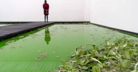 Dort, wo in der Fondation Beyerler in Riehen sonst an den Wänden Kunstwerke hängen, können Besucher durch die grüne Wasserlandschaft flanieren.